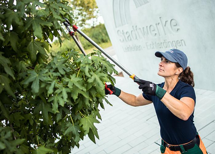 Gärtnerin der Stadtwerke stutzt Baum mit langer Astschere